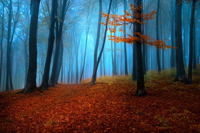 542929_foggy_misty_autumn_forest_5184x3456_(www_GdeFon_ru)