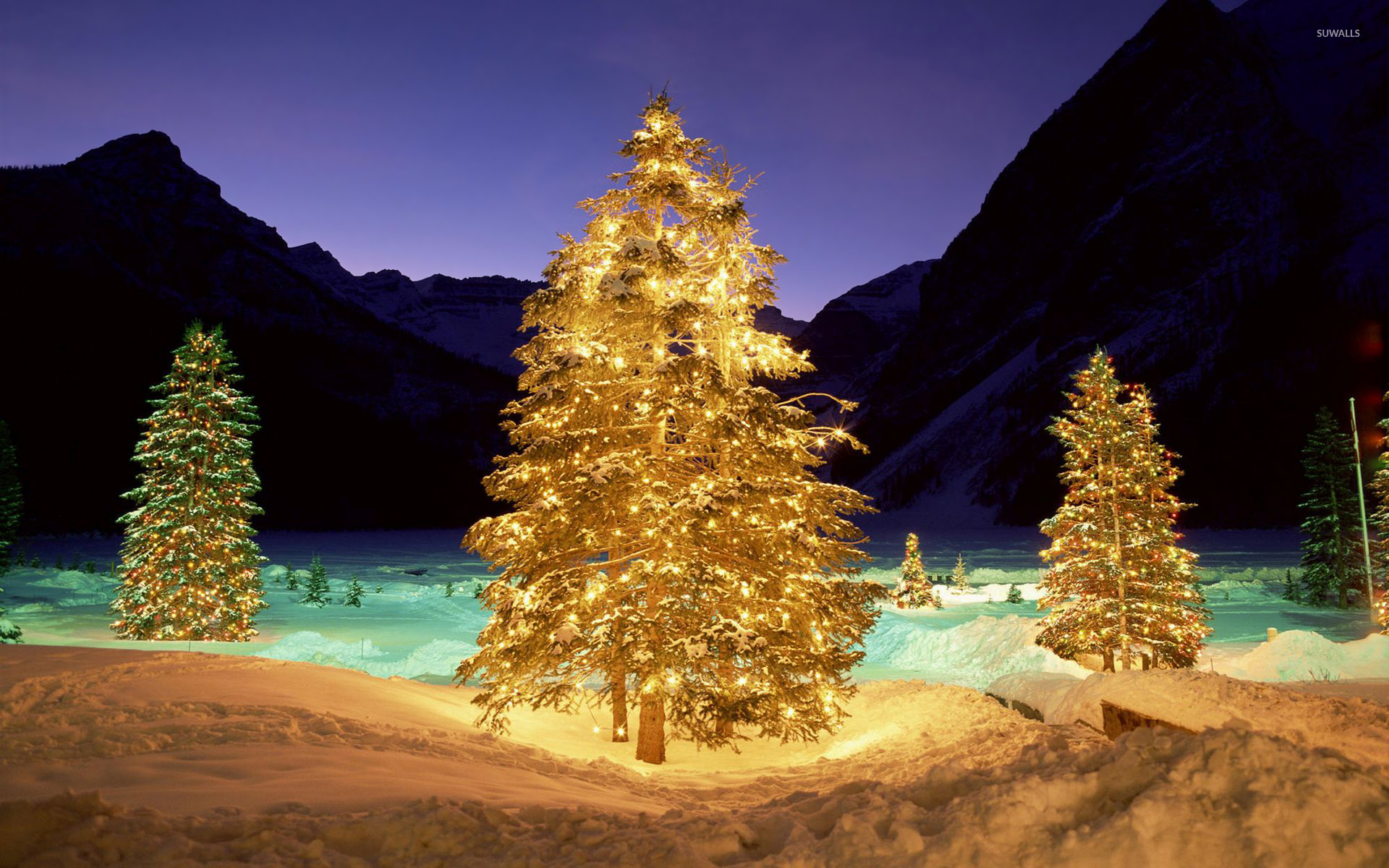 christmas-trees-in-the-snowy-nature-51961-1920x1200