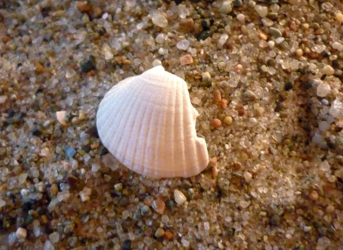 Just Another Shell