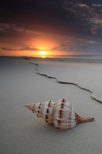 shell-on-a-beach-1