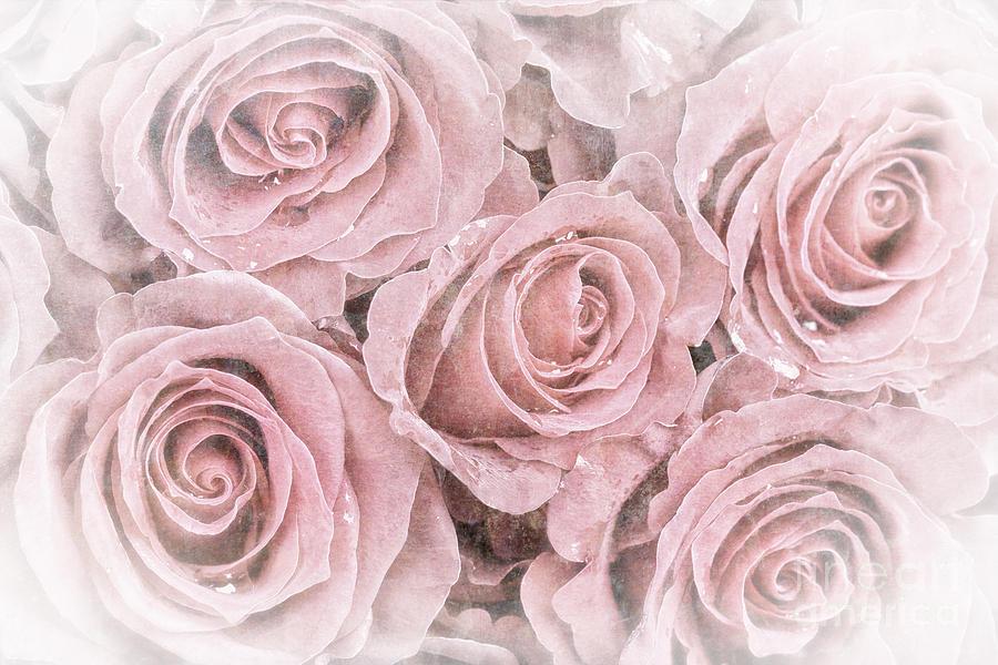 My Rose-Colored Illusion